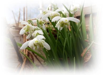 Vårens finaste